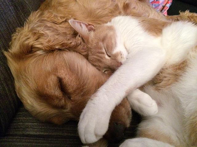 spící kočka a pes